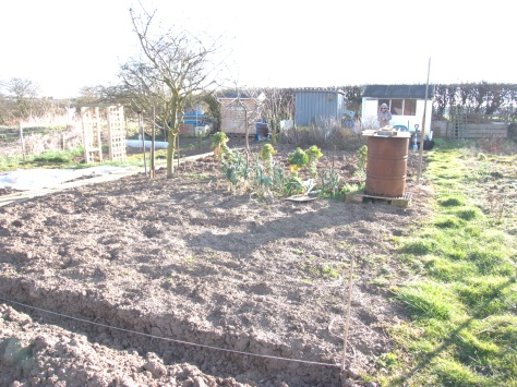 The plot before Hackenabush Chris planted four rows of potatoes.
