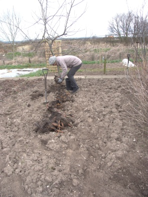 The start of looking after 'Trevor's' allotment - it has given us lots of pleasure and a few heartaches ...