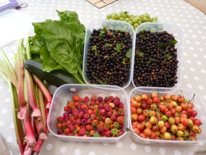 Despite rabbits, moles, slugs and butterflies, we reaped lots of lovely fruits and vegetables.