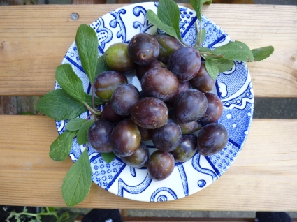 Okay - so these were not from the alotment but then neither were the dates and oranges in my chutney and marmalade - these were effectively 'scrumped' by my ever resourceful husband from the trees that overhang the ancient byway that runs beside our house in Barton. Photography tips from Heather and James.