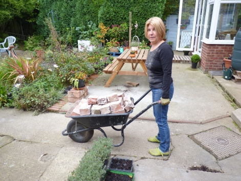 Meanwhile - for every brick that Chris hacked out, I carried downstairs 5 at a time and loaded into the wheelbarrow which I moved down to the bottom of the garden and piled neatly (of course). 60 bucket loads of bricks and 10 wheelbarrow loads - in excess of 450 kilograms of bricks removed, carried and 'barrowed! No wonder we were tired later.