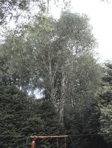 p1170932